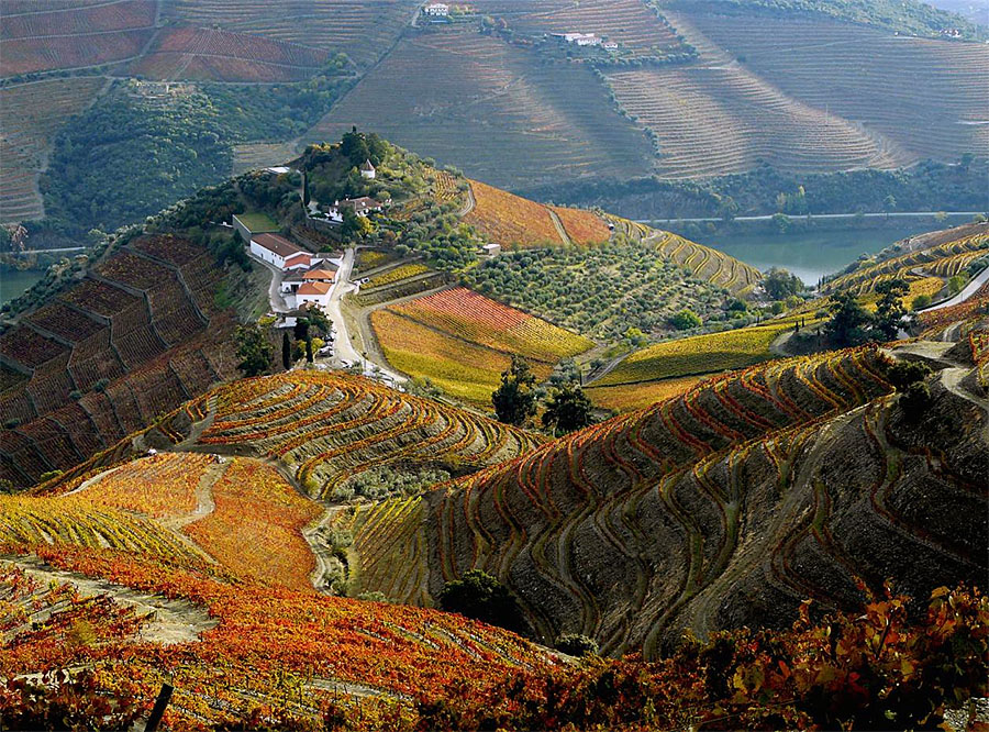 Douro Harvest Season