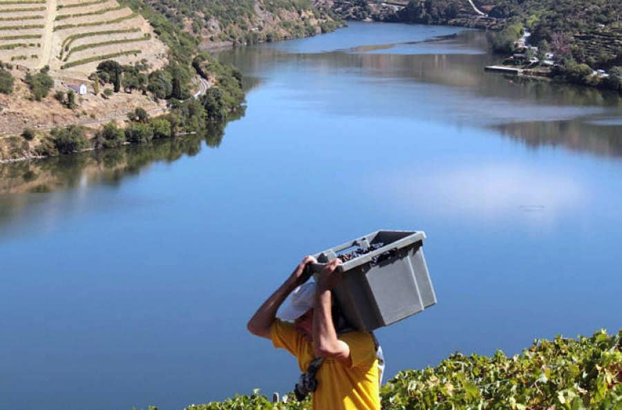 Harvest in Douro: Grape Carrying