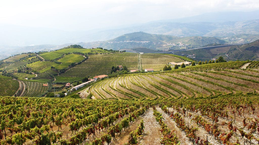 wine harvest experience in Douro